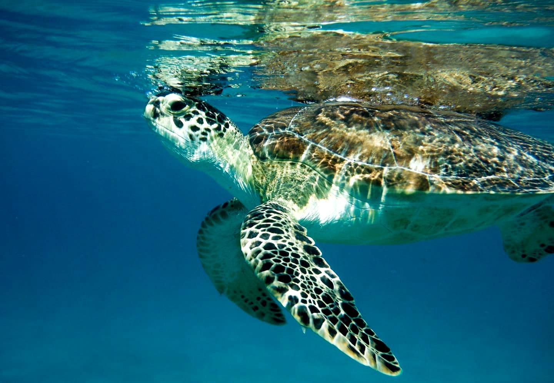 Swim with Sea Life