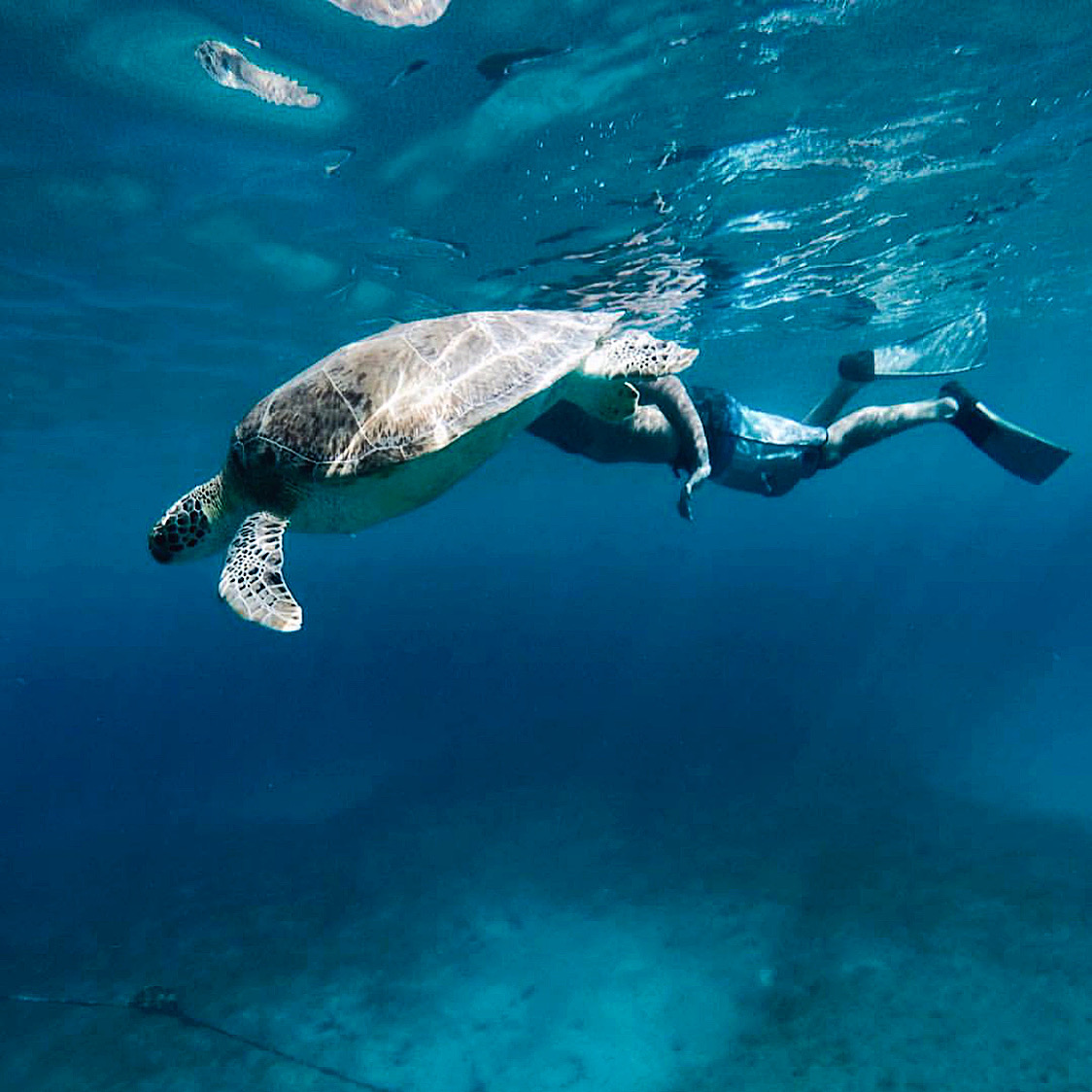 Snorkel with Turtles Day Sail